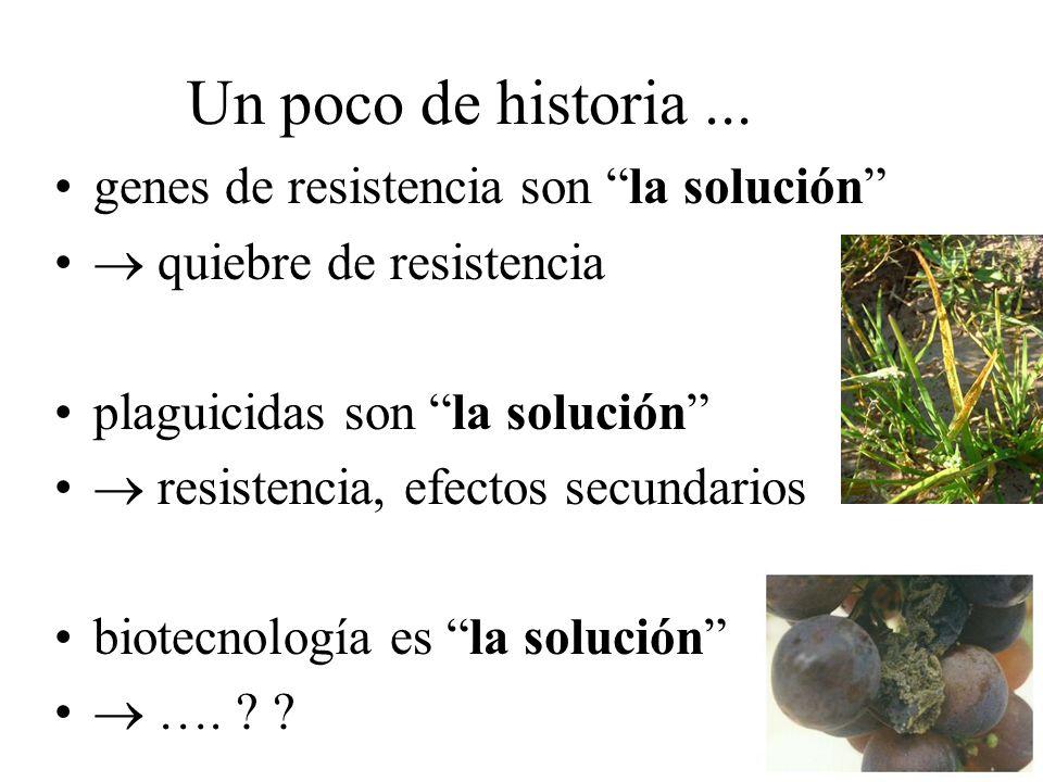 Manejo integrado de patógenos: Patógenos de suelo vs.