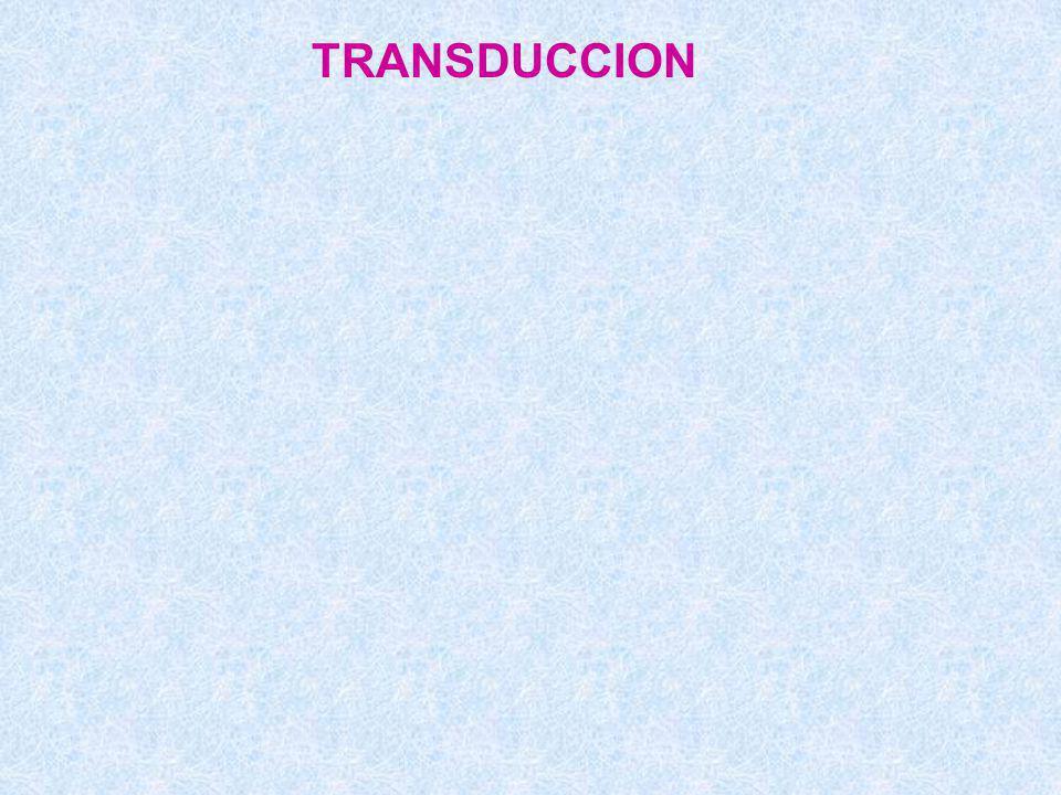 TRANSDUCCION
