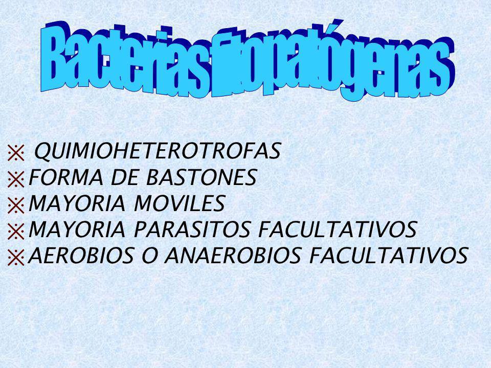 QUIMIOHETEROTROFAS FORMA DE BASTONES MAYORIA MOVILES MAYORIA PARASITOS FACULTATIVOS AEROBIOS O ANAEROBIOS FACULTATIVOS