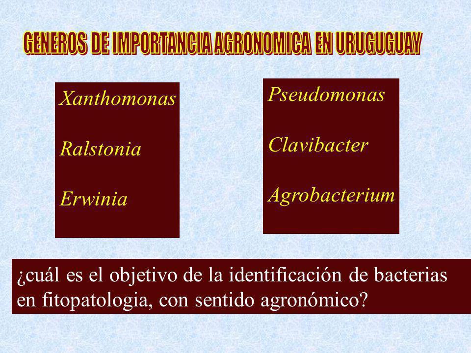 ¿cuál es el objetivo de la identificación de bacterias en fitopatologia, con sentido agronómico? Xanthomonas Ralstonia Erwinia Pseudomonas Clavibacter