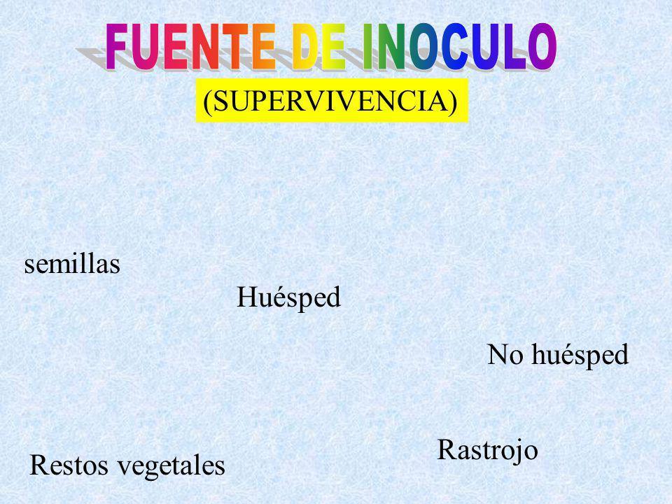 (SUPERVIVENCIA) semillas Restos vegetales No huésped Huésped Rastrojo