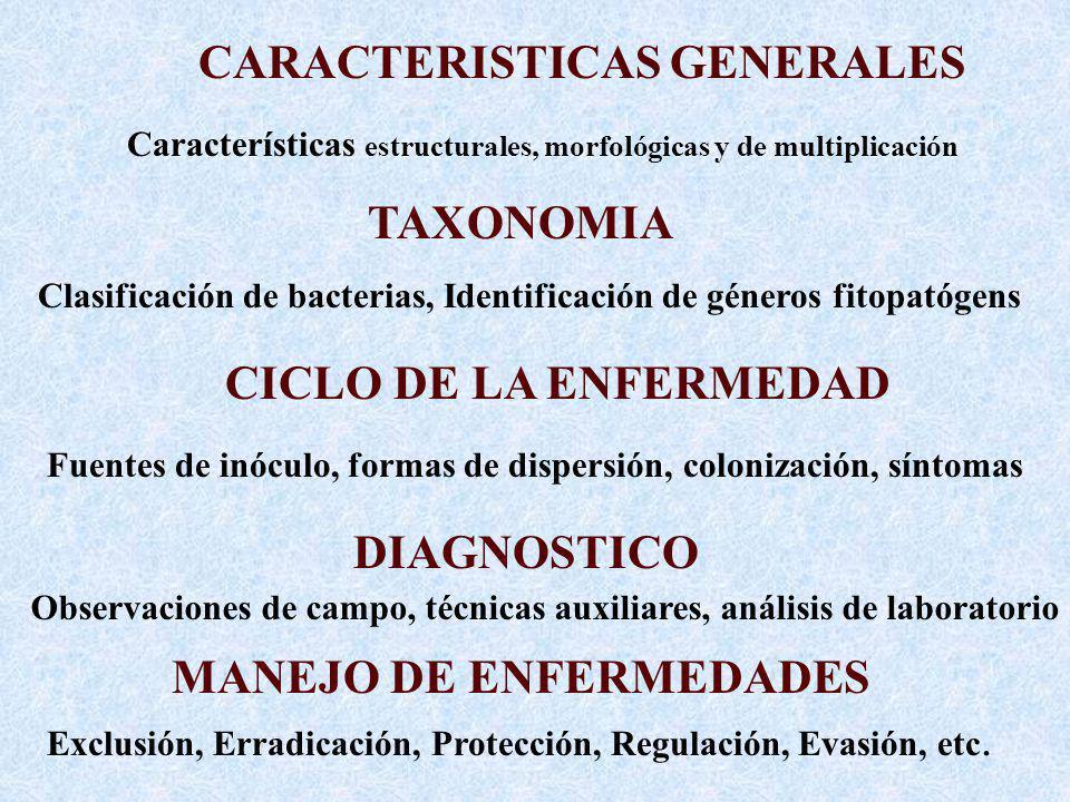 Características estructurales, morfológicas y de multiplicación Clasificación de bacterias, Identificación de géneros fitopatógens Fuentes de inóculo, formas de dispersión, colonización, síntomas Observaciones de campo, técnicas auxiliares, análisis de laboratorio CARACTERISTICAS GENERALES TAXONOMIA CICLO DE LA ENFERMEDAD DIAGNOSTICO MANEJO DE ENFERMEDADES Exclusión, Erradicación, Protección, Regulación, Evasión, etc.