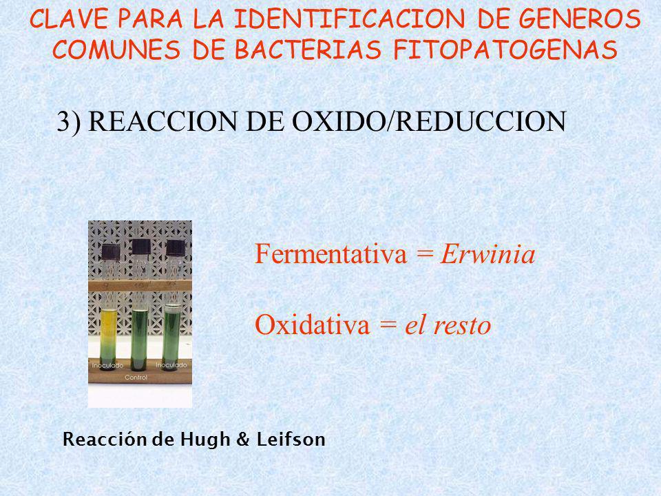 Reacción de Hugh & Leifson 3) REACCION DE OXIDO/REDUCCION CLAVE PARA LA IDENTIFICACION DE GENEROS COMUNES DE BACTERIAS FITOPATOGENAS Fermentativa = Erwinia Oxidativa = el resto