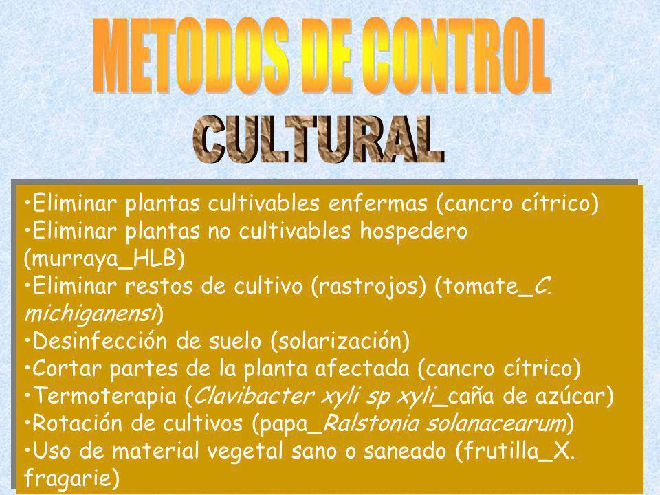 Eliminar plantas cultivables enfermas (cancro cítrico) Eliminar plantas no cultivables hospedero (murraya_HLB) Eliminar restos de cultivo (rastrojos) (tomate_C.