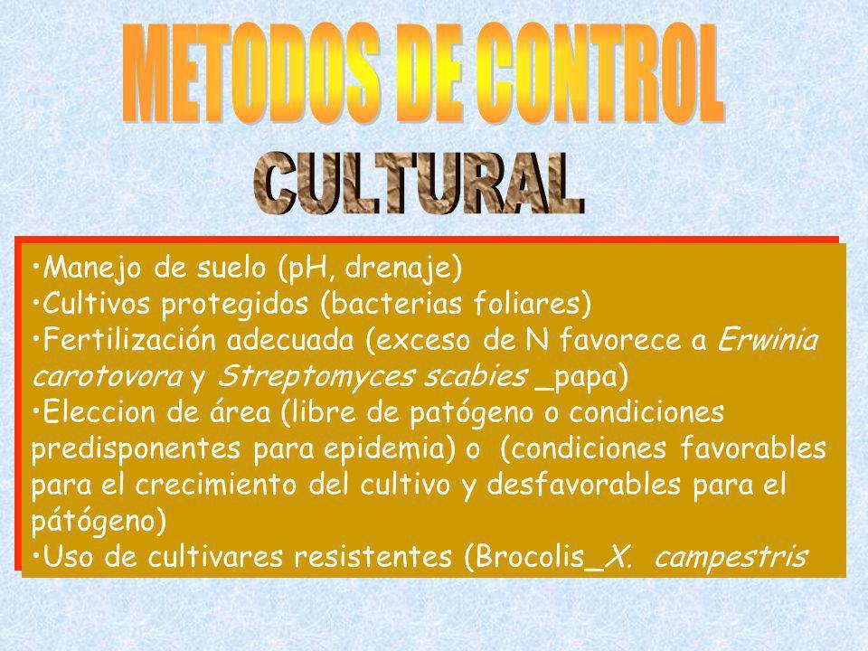 Manejo de suelo (pH, drenaje) Cultivos protegidos (bacterias foliares) Fertilización adecuada (exceso de N favorece a Erwinia carotovora y Streptomyce