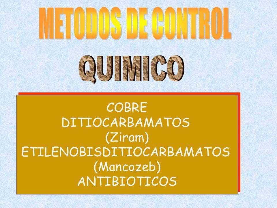 COBRE DITIOCARBAMATOS (Ziram) ETILENOBISDITIOCARBAMATOS (Mancozeb) ANTIBIOTICOS COBRE DITIOCARBAMATOS (Ziram) ETILENOBISDITIOCARBAMATOS (Mancozeb) ANT