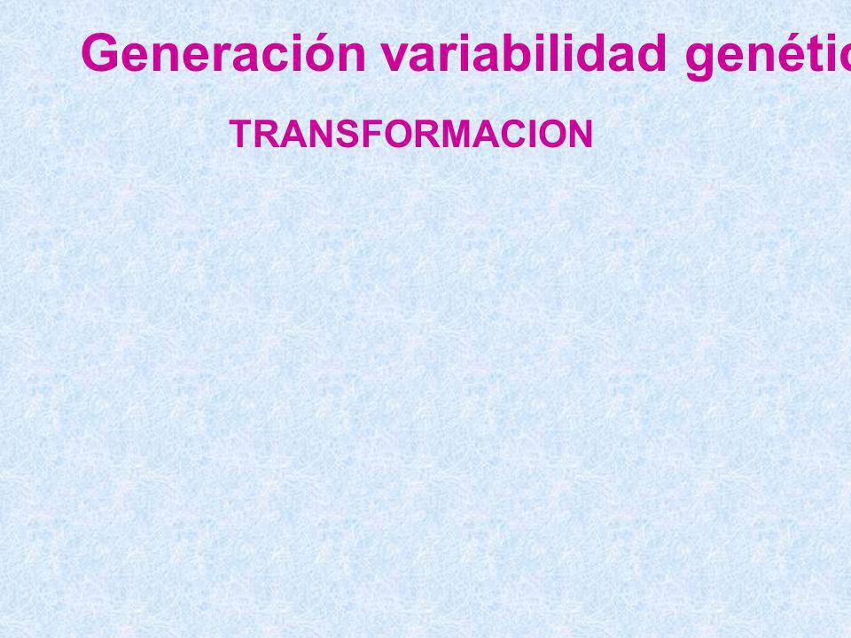 Generación variabilidad genética TRANSFORMACION