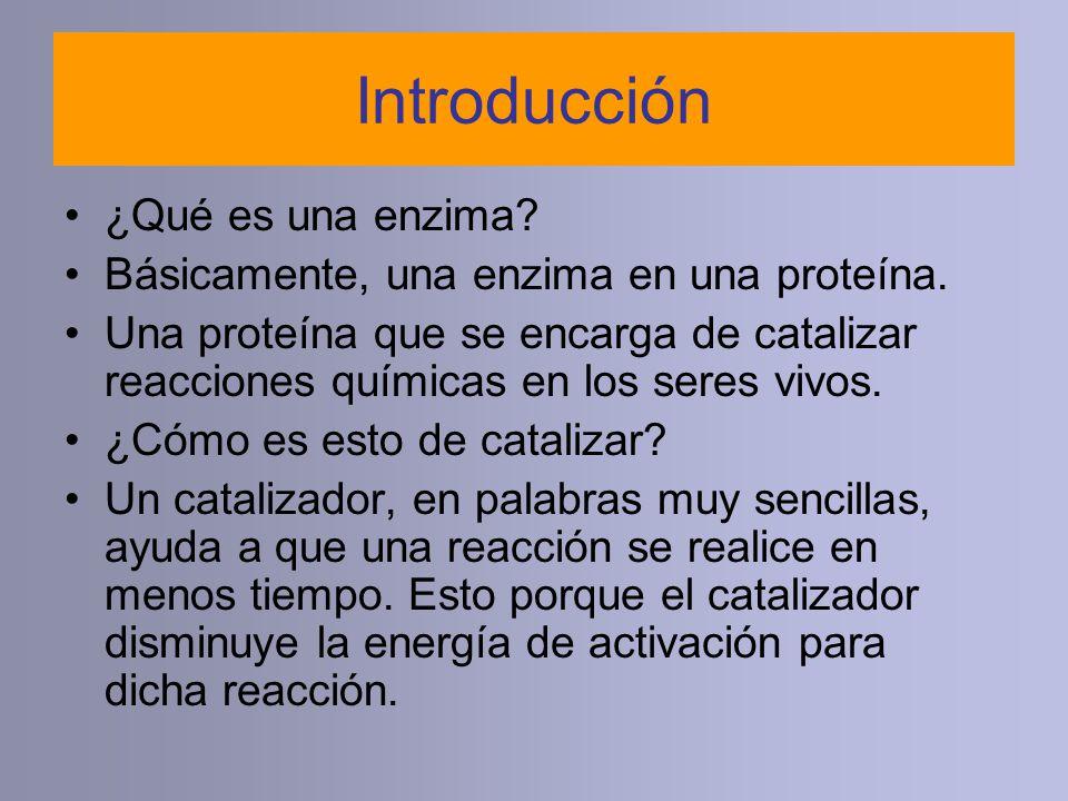 Introducción ¿Qué es una enzima? Básicamente, una enzima en una proteína. Una proteína que se encarga de catalizar reacciones químicas en los seres vi