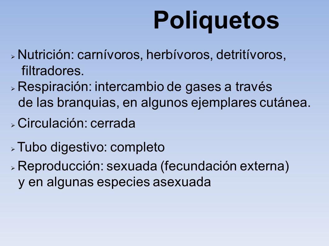 Nutrición: carnívoros, herbívoros, detritívoros, filtradores. Respiración: intercambio de gases a través de las branquias, en algunos ejemplares cután