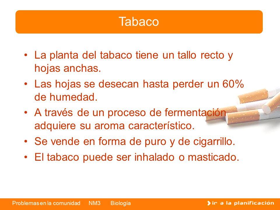 Problemas en la comunidad NM3 Biología La planta del tabaco tiene un tallo recto y hojas anchas. Las hojas se desecan hasta perder un 60% de humedad.