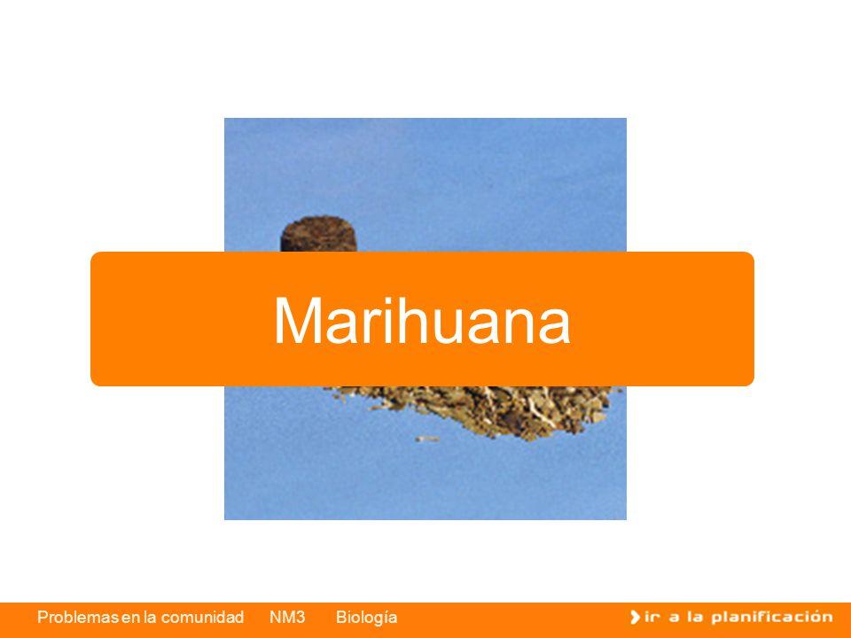 Problemas en la comunidad NM3 Biología Marihuana
