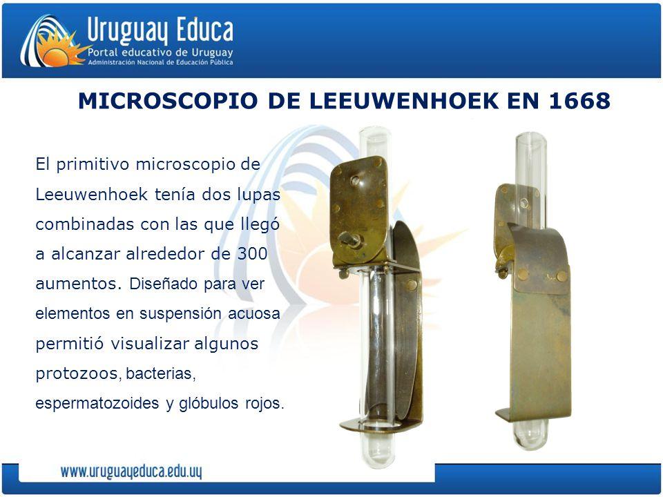 MICROSCOPIO DE LEEUWENHOEK EN 1668 El primitivo microscopio de Leeuwenhoek tenía dos lupas combinadas con las que llegó a alcanzar alrededor de 300 aumentos.