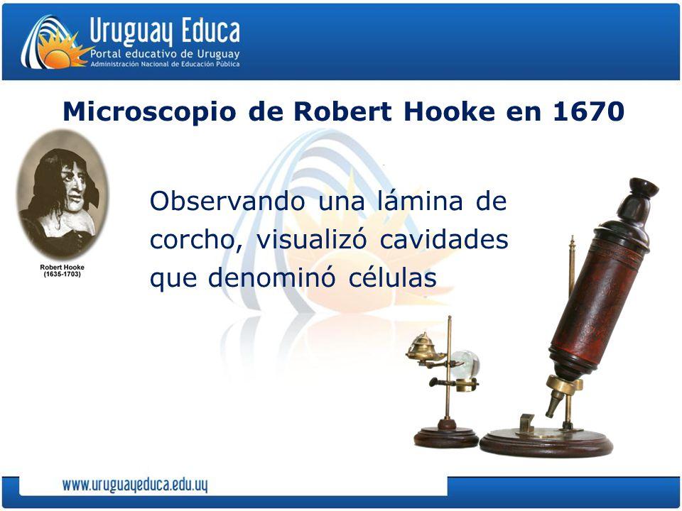 Microscopio de Robert Hooke en 1670 Observando una lámina de corcho, visualizó cavidades que denominó células