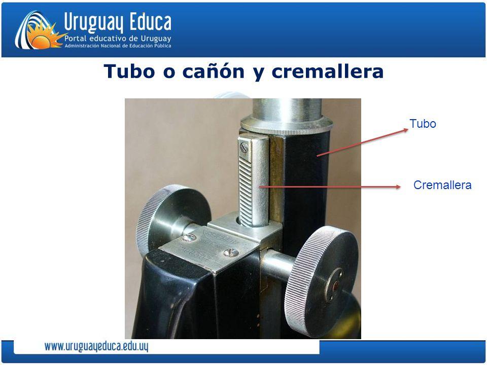 Tubo o cañón y cremallera Tubo Cremallera