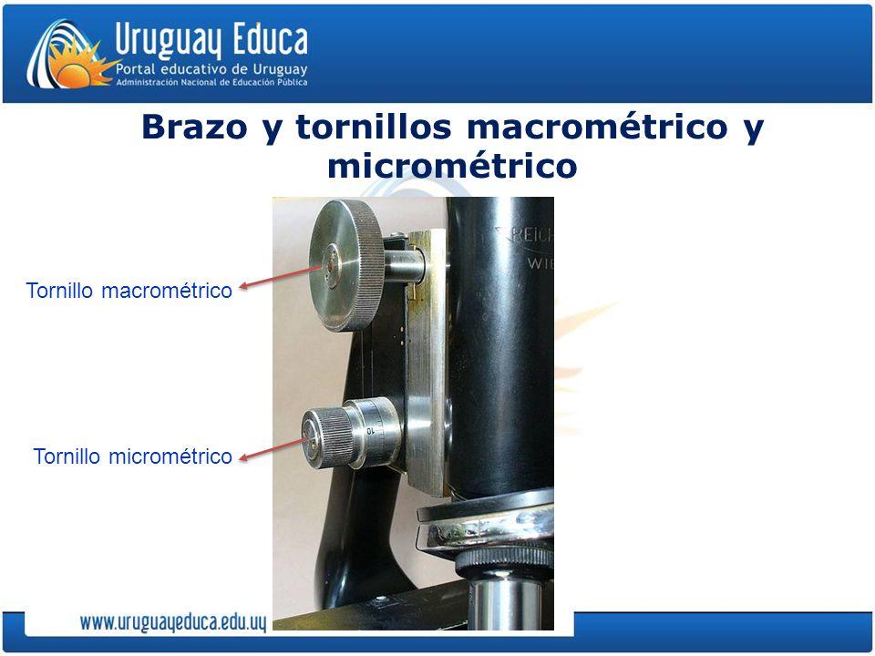 Brazo y tornillos macrométrico y micrométrico Tornillo macrométrico Tornillo micrométrico