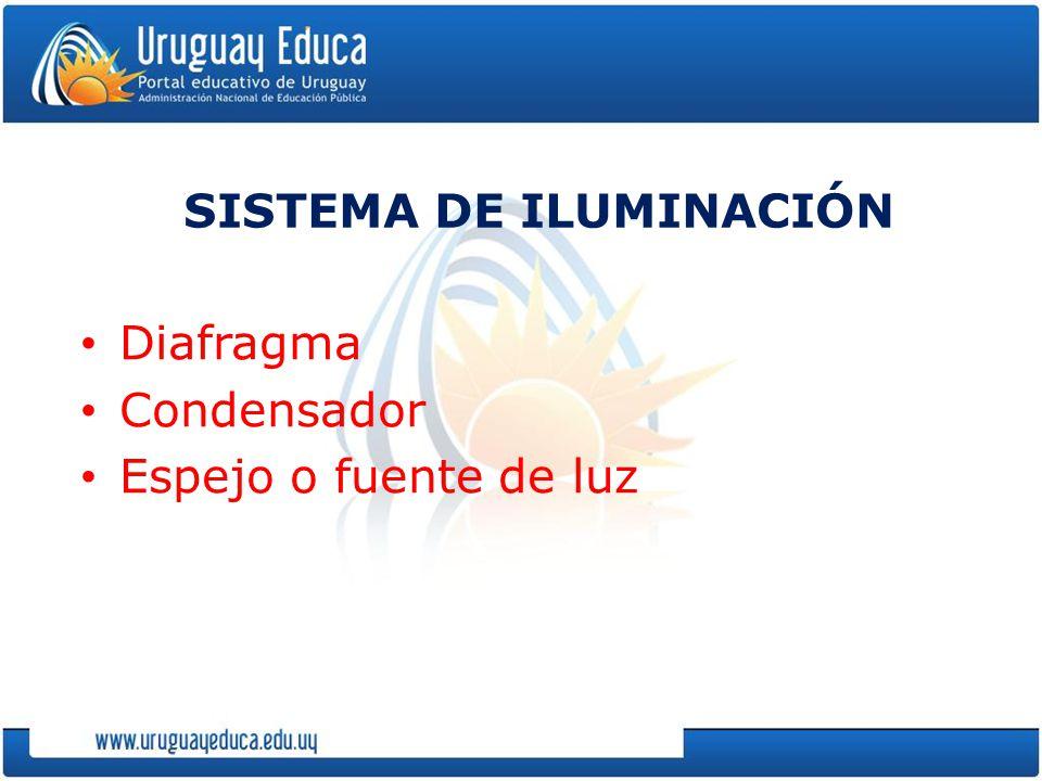 SISTEMA DE ILUMINACIÓN Diafragma Condensador Espejo o fuente de luz