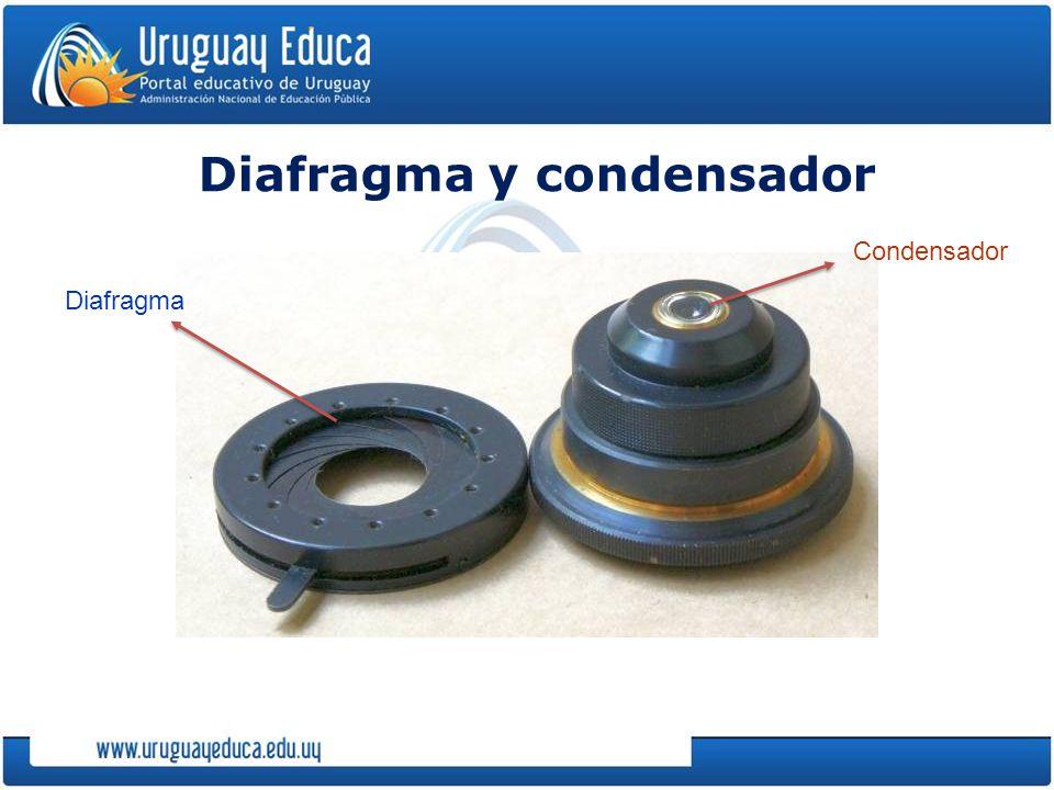 Diafragma y condensador Condensador Diafragma