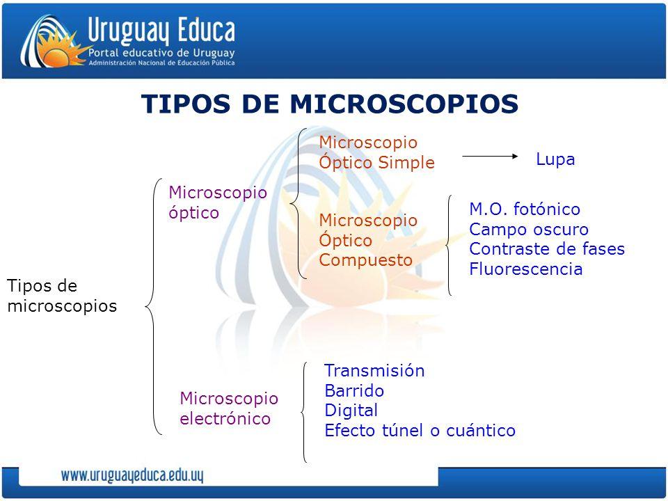 TIPOS DE MICROSCOPIOS Tipos de microscopios Microscopio óptico Microscopio electrónico Microscopio Óptico Simple Microscopio Óptico Compuesto M.O.