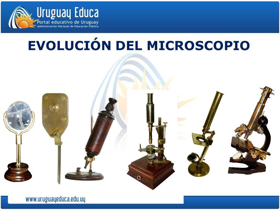 EVOLUCIÓN DEL MICROSCOPIO