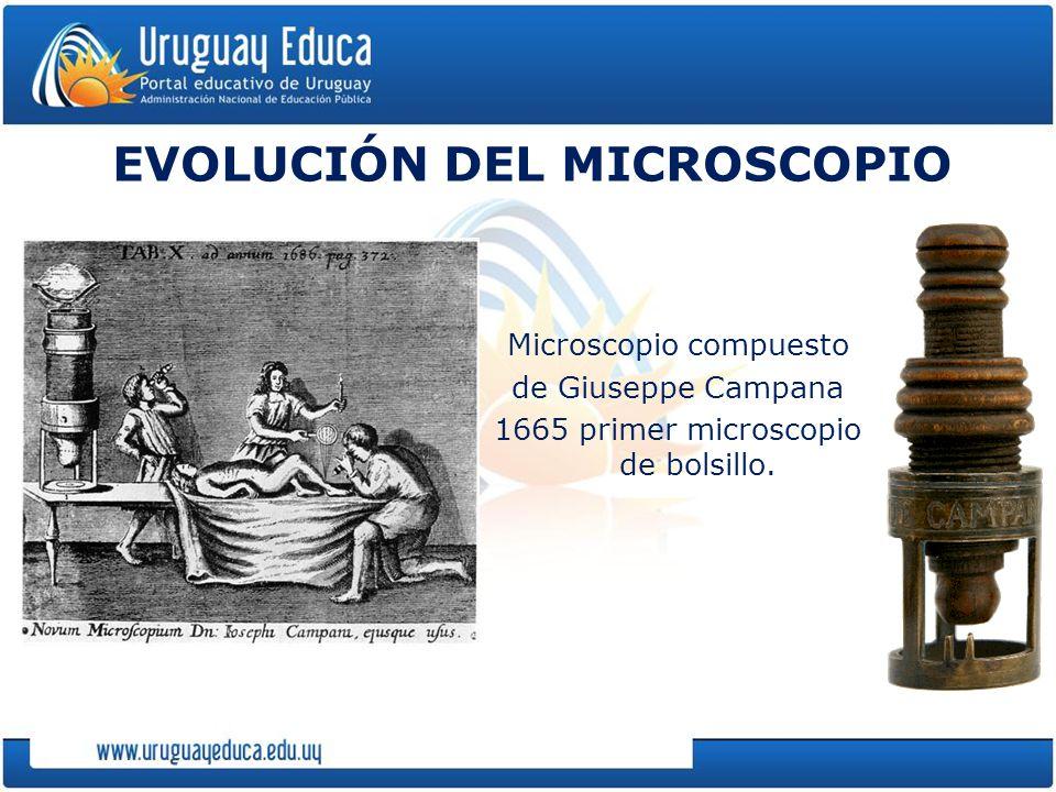 EVOLUCIÓN DEL MICROSCOPIO Microscopio compuesto de Giuseppe Campana 1665 primer microscopio de bolsillo.