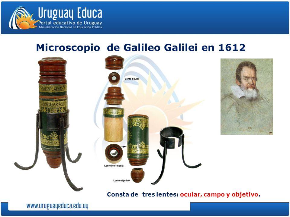 Microscopio de Galileo Galilei en 1612 Consta de tres lentes: ocular, campo y objetivo.