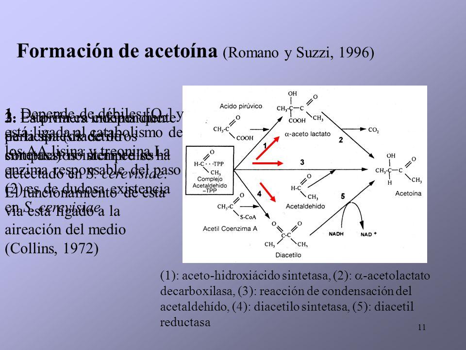 11 Formación de acetoína (Romano y Suzzi, 1996) 1. Depende de débiles [O 2 ] y está ligada al catabolismo de los AA lisina y treonina.La enzima respon