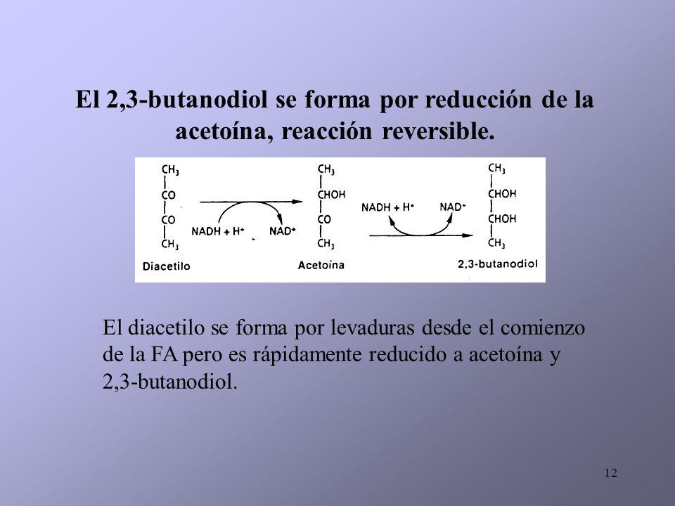 12 El diacetilo se forma por levaduras desde el comienzo de la FA pero es rápidamente reducido a acetoína y 2,3-butanodiol. El 2,3-butanodiol se forma