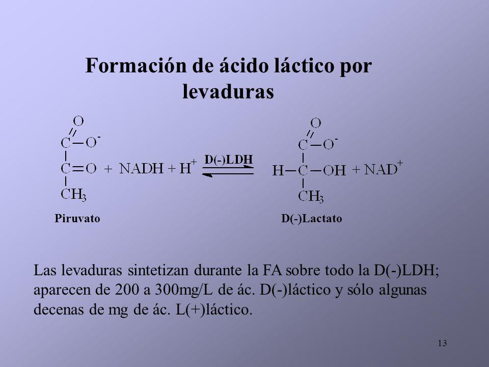 13 Formación de ácido láctico por levaduras PiruvatoD(-)Lactato Las levaduras sintetizan durante la FA sobre todo la D(-)LDH; aparecen de 200 a 300mg/