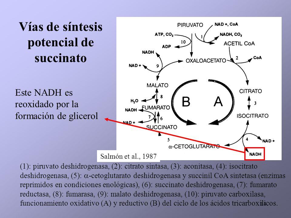 14 (1): piruvato deshidrogenasa, (2): citrato sintasa, (3): aconitasa, (4): isocitrato deshidrogenasa, (5): -cetoglutarato deshidrogenasa y succinil C