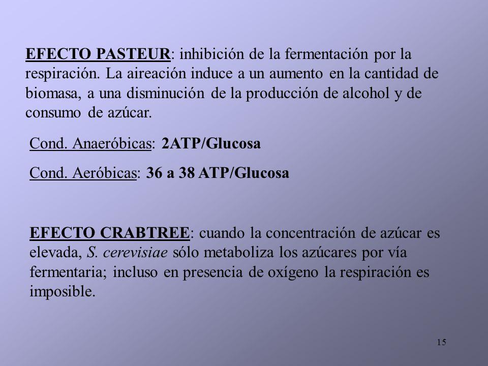 15 EFECTO PASTEUR: inhibición de la fermentación por la respiración. La aireación induce a un aumento en la cantidad de biomasa, a una disminución de