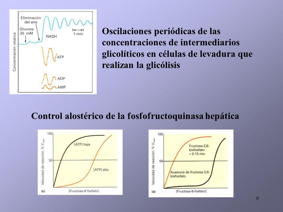 6 Oscilaciones periódicas de las concentraciones de intermediarios glicolíticos en células de levadura que realizan la glicólisis Control alostérico d