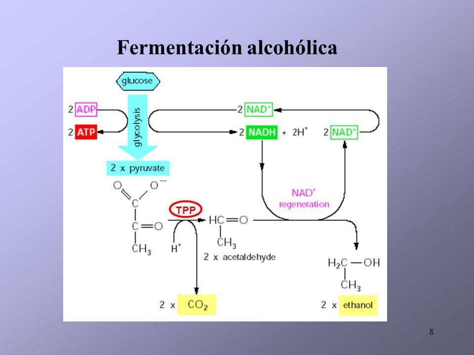 9 Síntesis de glicerol Cada vez que una molécula de piruvato no es utilizada por la FA, pero sirve para formar productos secundarios, se genera una molécula de glicerol.