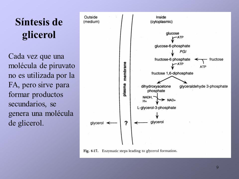 9 Síntesis de glicerol Cada vez que una molécula de piruvato no es utilizada por la FA, pero sirve para formar productos secundarios, se genera una mo