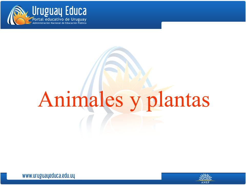 Animales y plantas Animales y plantas Desde siempre al ser humano le ha interesado conocer la naturaleza y aprovechar sus recursos.