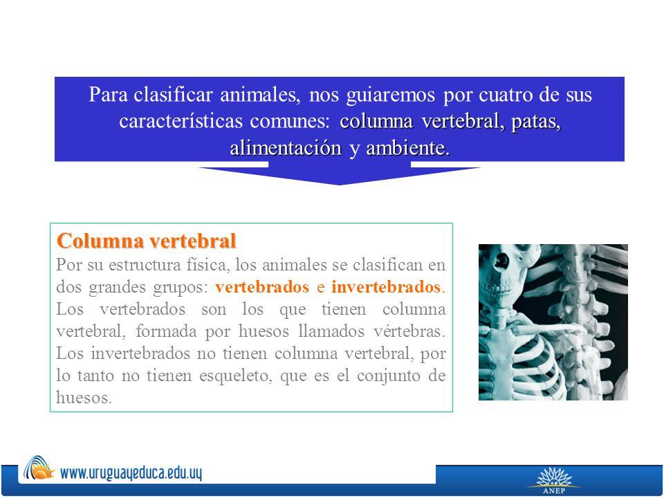 De acuerdo a esta clasificación podemos decir que el perro es vertebrado y la lombriz, invertebrado.