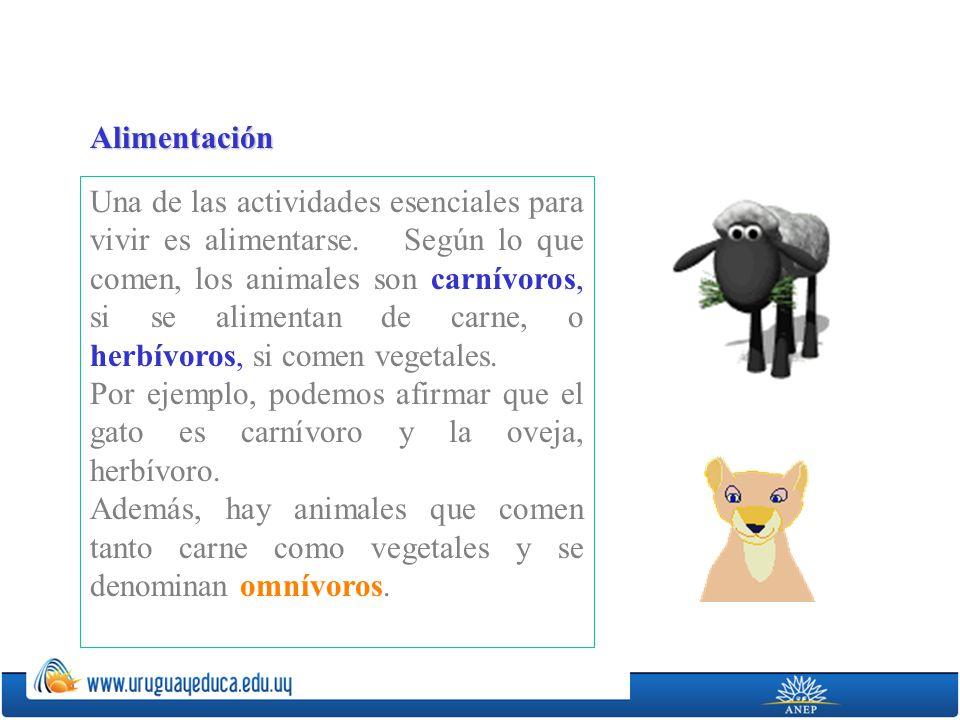 Ahora, clasificaremos a los animales tomando en cuenta el ambiente en el cual viven y se desplazan.