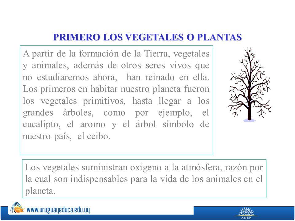 Los vegetales que hoy conocemos tienen sus partes principales bien definidas: Raíz: órgano generalmente subterráneo, que fija el vegetal al suelo.