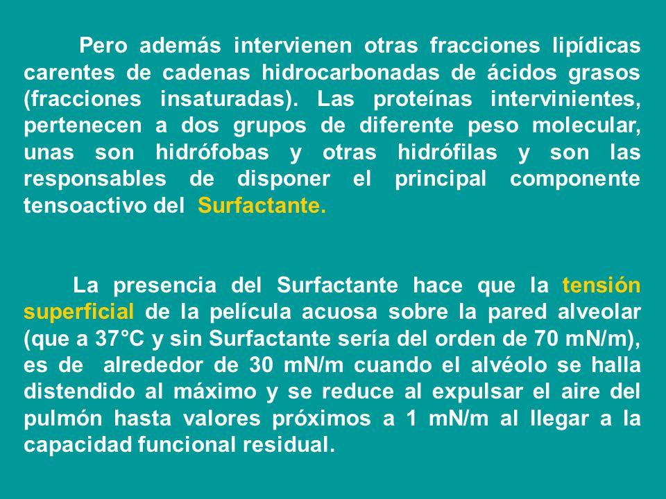Propiedades del Surfactante y la estabilidad alveolar. El Surfactante es un sistema tensoactivo constituido por fosfolípidos y proteínas segregados po