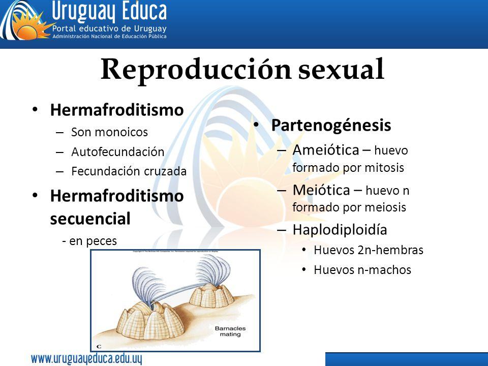 Reproducción sexual Hermafroditismo – Son monoicos – Autofecundación – Fecundación cruzada Hermafroditismo secuencial - en peces Partenogénesis – Amei
