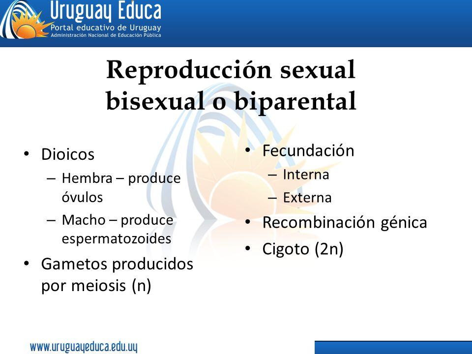 Reproducción sexual bisexual o biparental Dioicos – Hembra – produce óvulos – Macho – produce espermatozoides Gametos producidos por meiosis (n) Fecun