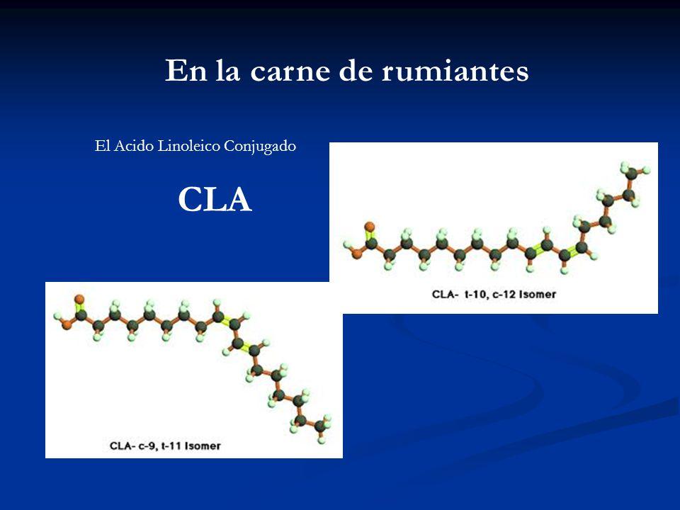 El Acido Linoleico Conjugado CLA En la carne de rumiantes