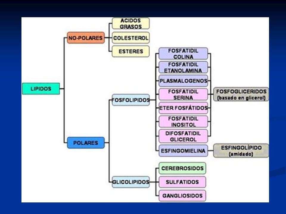 Es la flora del rumen el responsable de la formación de los ácidos grasos C18:2 (cis-9, cis-12) C18:2 (cis-9, trans-11) C18:2 (trans-10, cis-12) C18:1 (trans-11) C18:1 (trans-10) C18:0 Intermediarios de la biohidrogenación CLA