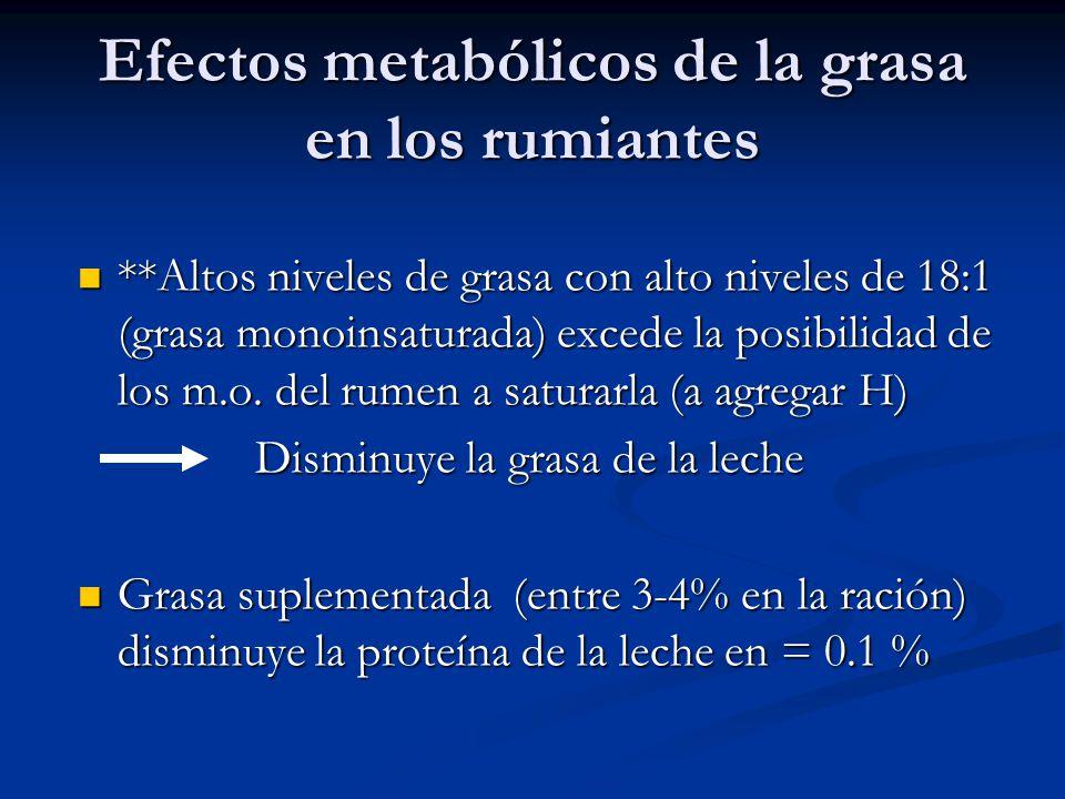 Efectos metabólicos de la grasa en los rumiantes **Altos niveles de grasa con alto niveles de 18:1 (grasa monoinsaturada) excede la posibilidad de los