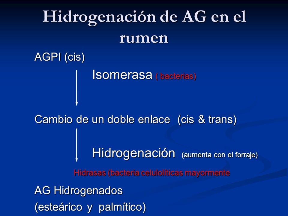 Hidrogenación de AG en el rumen AGPI (cis) Isomerasa ( bacterias) Cambio de un doble enlace (cis & trans) Hidrogenación (aumenta con el forraje) Hidra