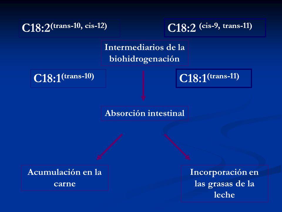 C18:2 (cis-9, trans-11) C18:2 (trans-10, cis-12) C18:1 (trans-11) C18:1 (trans-10) Intermediarios de la biohidrogenación Absorción intestinal Incorpor