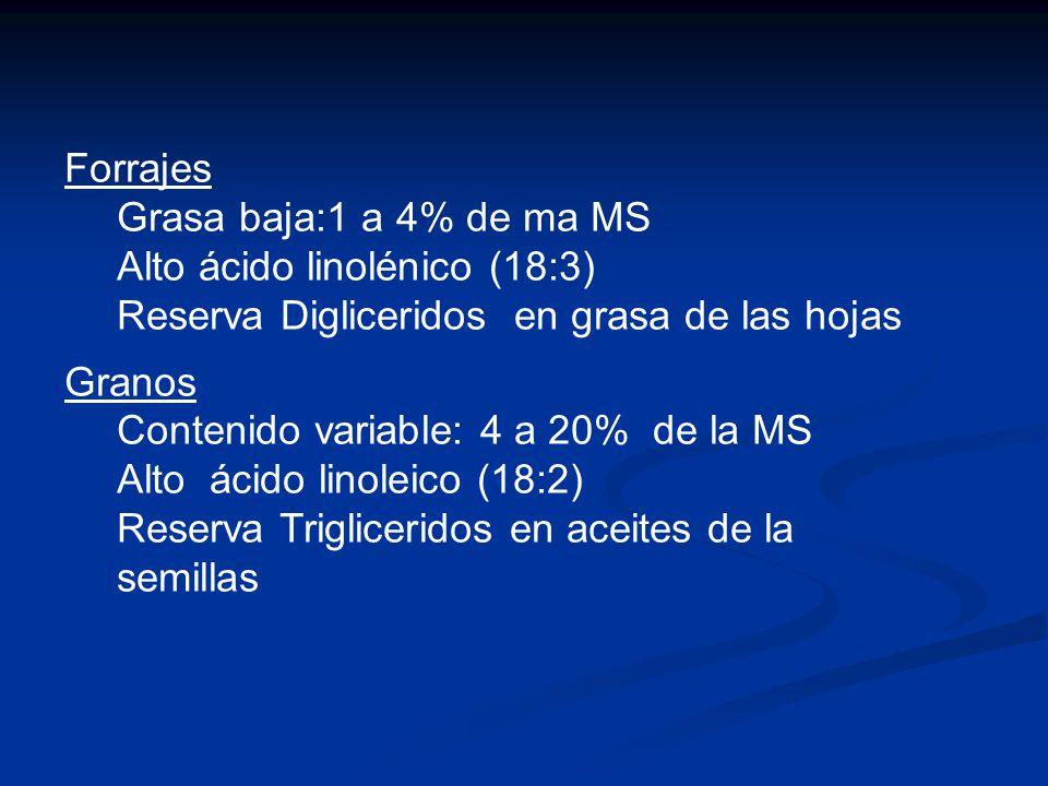 Forrajes Grasa baja:1 a 4% de ma MS Alto ácido linolénico (18:3) Reserva Digliceridos en grasa de las hojas Granos Contenido variable: 4 a 20% de la M
