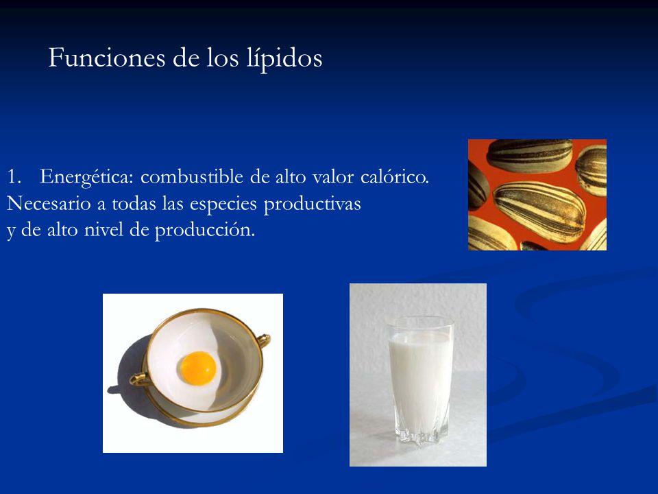 Funciones de los lípidos 1.Energética: combustible de alto valor calórico. Necesario a todas las especies productivas y de alto nivel de producción.