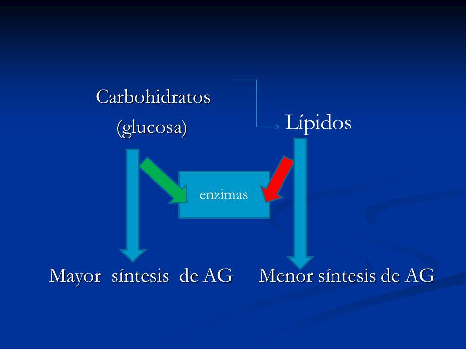 Carbohidratos Carbohidratos (glucosa) (glucosa) Mayor síntesis de AG Menor síntesis de AG Mayor síntesis de AG Menor síntesis de AG enzimas Lípidos