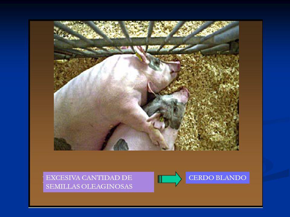 EXCESIVA CANTIDAD DE SEMILLAS OLEAGINOSAS CERDO BLANDO