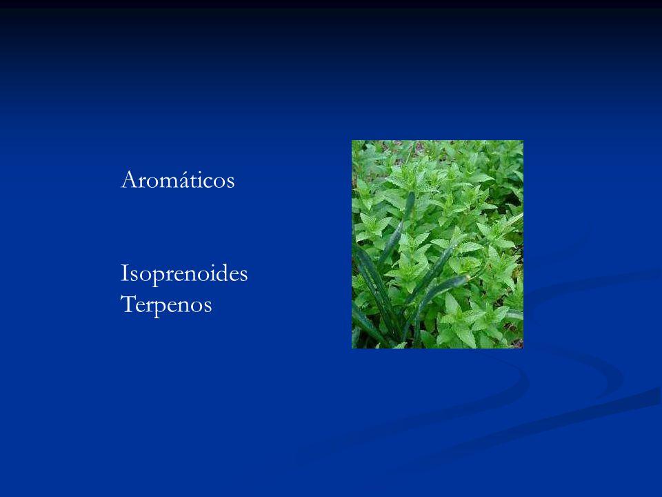 Aromáticos Isoprenoides Terpenos